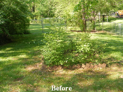Curb Appeal - Before