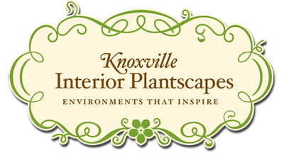Knoxville Interior Plantscapes