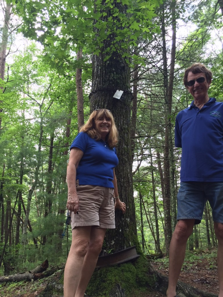 Pearl Harbor Tree Cades Cove Smoky Mountains State Park Pam and Allen Douglass