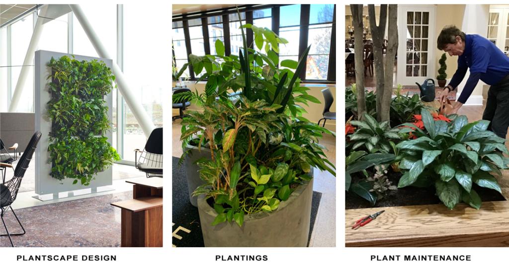Plantscape Design | Plantings | Plant Maintenance